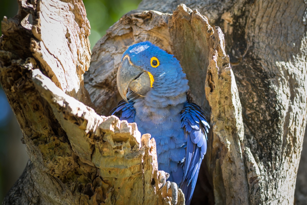 Pantanal - poprvé v Brazílii