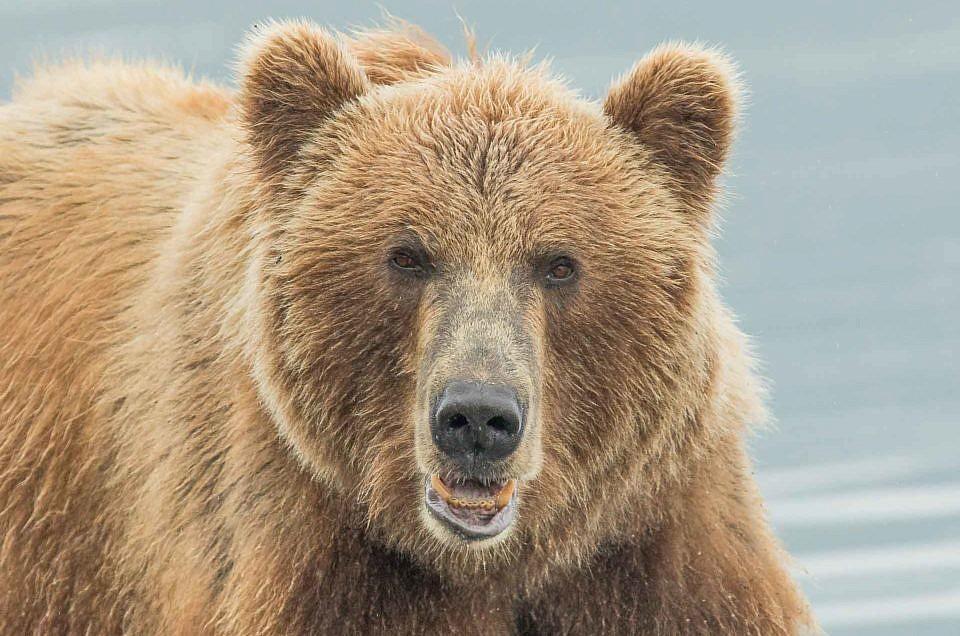 Kamčatka - země medvědů
